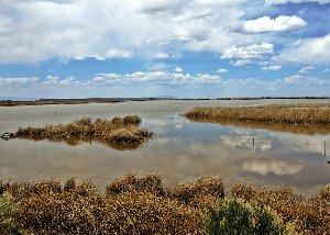 Clear Lake Waterfowl Area